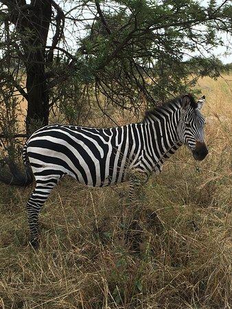 Sayari Camp, Asilia Africa: keeping my eyes open