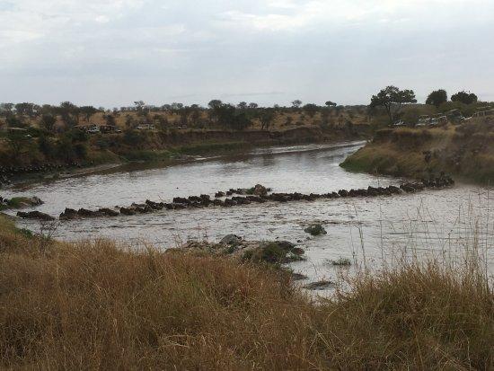 Sayari Camp, Asilia Africa: A wildebeest crossing of the Mara River