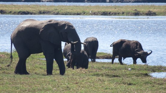 Kasane, Botswana: Chobe National Park Riverfront