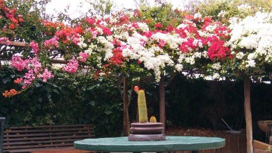 Thyme at Rosemary's Restaurant : Bouganvilla surrounding the garden courtyard