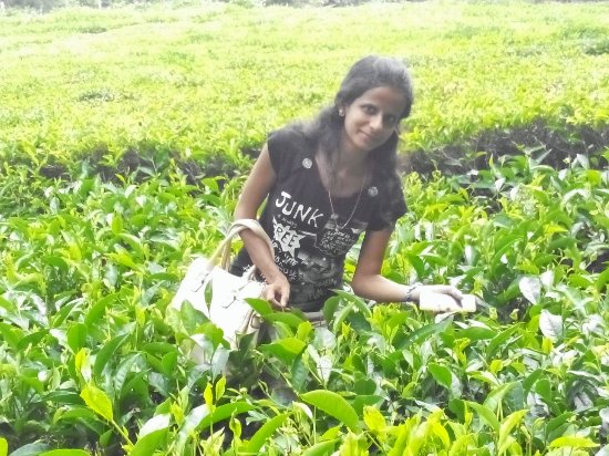 Dodabetta Tea Museum and Factory: Tea garden in Ooty where you can click pictures and get a dress in rent and take a click pluckin