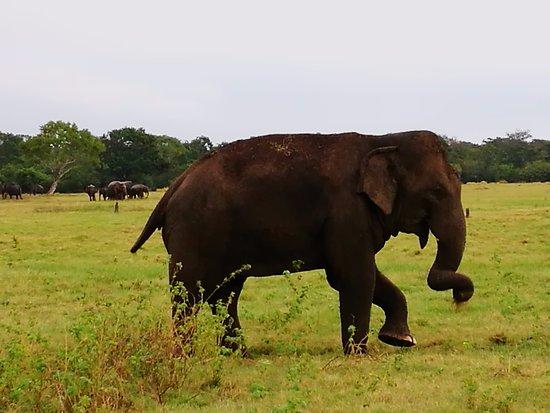 Habarana, Sri Lanka: Каудулла