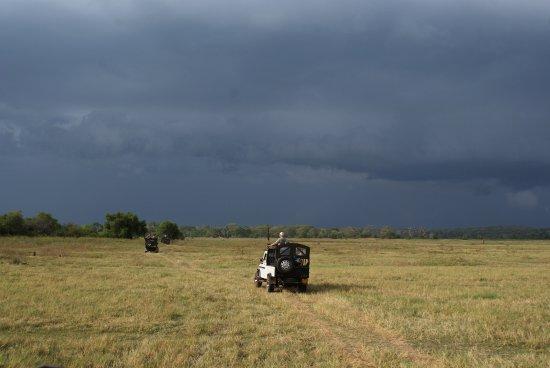 Habarana, Sri Lanka: Bonita excursión para ver elefantes en libertad