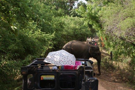 Habarana, Sri Lanka: Los elefantes son la principal atracción de este parque