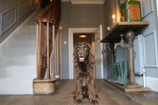 Bradford-on-Avon, UK: Pet Friendly