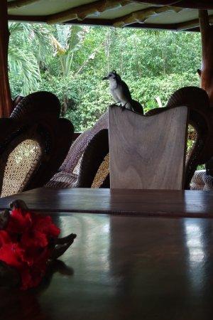 Villa Mango: Tierischer Besuch am Frühstückstisch