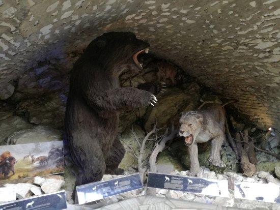 Stronie Slaskie, Polen: Bear