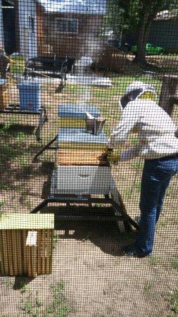 Navasota, TX: Bee tour