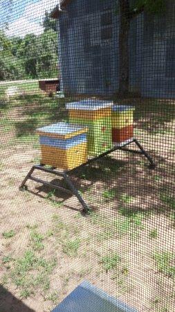 Navasota, TX: Bees