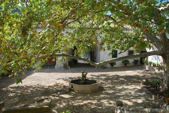 Bunyola, Spagna: große Platane