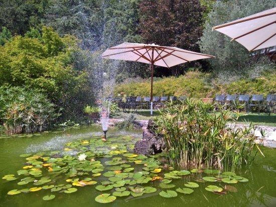 Giardino con laghetto foto di giardino botanico gavinell - Giardino con laghetto ...