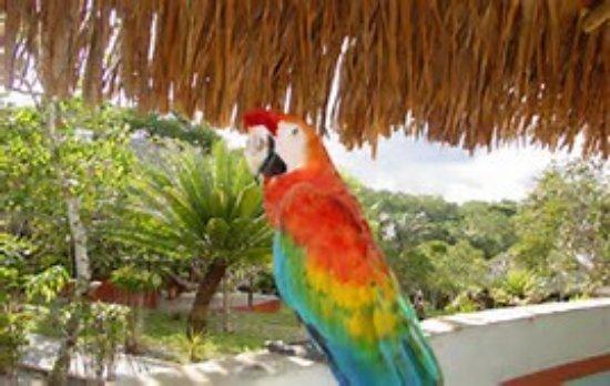 Amazon Ecopark Jungle Lodge: Arara livre descansa em área do hotel
