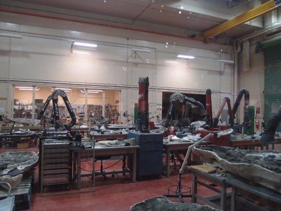 Museo Real Tyrrell: 実際の作業工程
