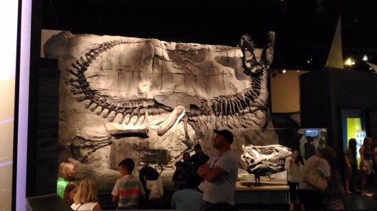 Museo Real Tyrrell: 迫力あります