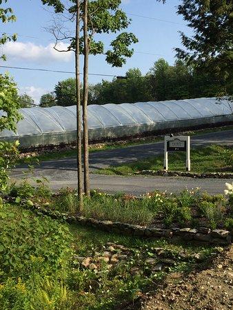 Dunham, Canada: Serres pour vignes raisins rouges