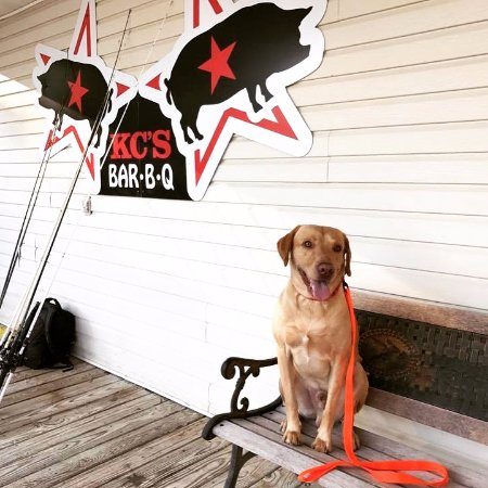 Scottsboro, AL: Our friend Cooper visited us again. We love it when good dogs bring their owners to KC's BBQ.