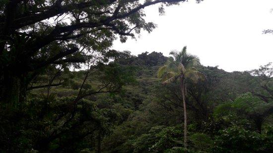 Koro Sun Resort and Rainforest Spa: On the rainforest walk