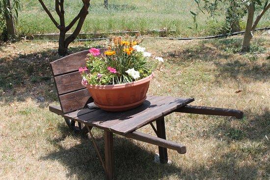 Piccione, อิตาลี: Carola fiorita