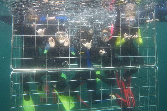 Scottburgh, Sydafrika: Shark Cage Diving