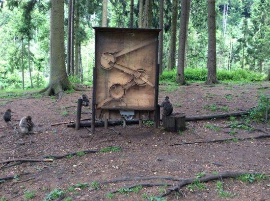 Abenteuer Affenberg tt.: To jest zabawka dla małpek