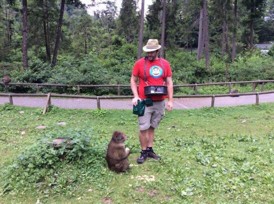 Abenteuer Affenberg tt.: Przewodnik z małpką, która czeka na jedzenie