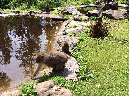 Abenteuer Affenberg tt.: Małpki mają swoje jeziorko w którym bawią się