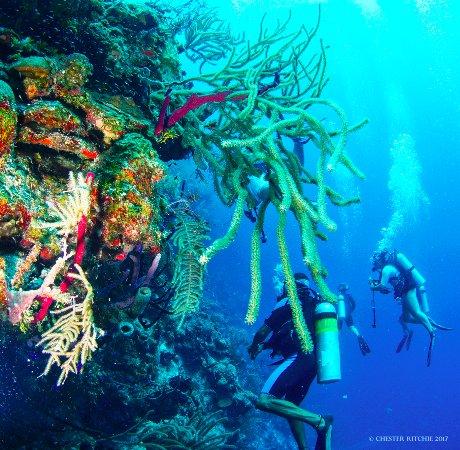 Turneffe Island, เบลีซ: Turneffe reef wall
