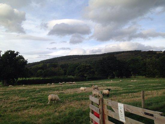 St. Asaph, UK: Rhuallt Country Park