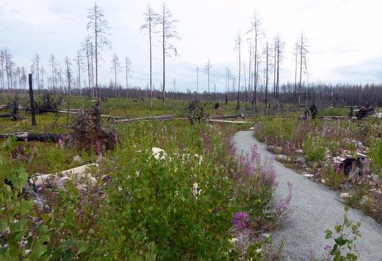 Halleskogsbrannans Naturreservat