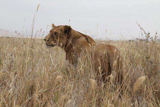 Photos of Natural World Kenya Safaris, Mombasa