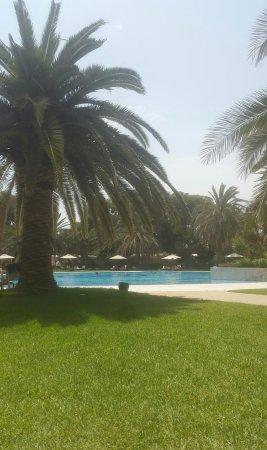 Yasmin Hammamet : IMG_1502365843495_large.jpg