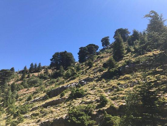 Horsh Ehden Nature Reserve: photo9.jpg