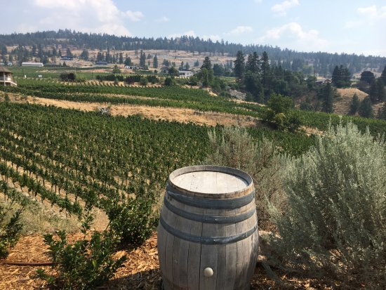 Penticton, Canadá: View of vineyards up the hill from Red Rooster Winery.