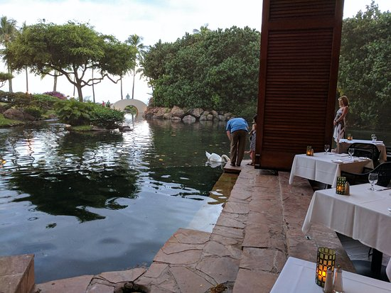 Swans at the Son'z Steakhouse, Hyatt