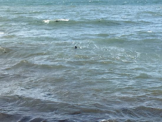 Lee, UK: photo4.jpg