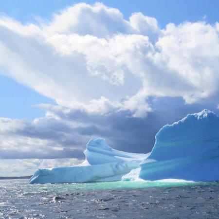 Iceberg Man Tours Twillingate