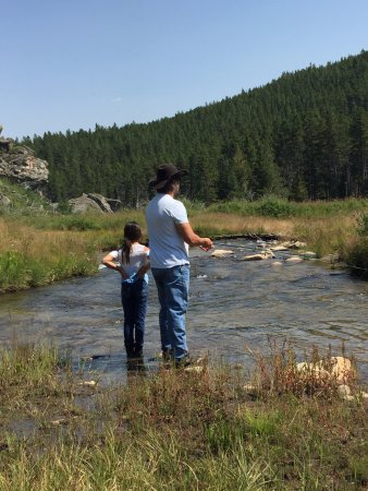 Buffalo, WY: Fly fishing on French Creek - lots of trout!