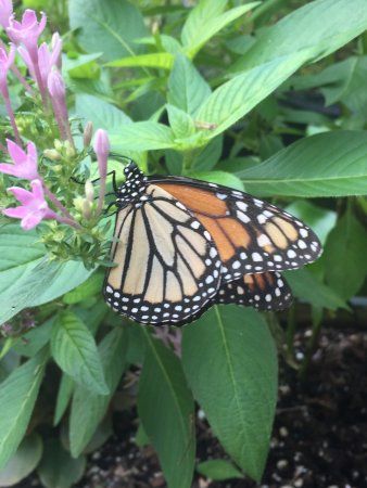 Mount Pleasant, SC: Butterfly Gardens