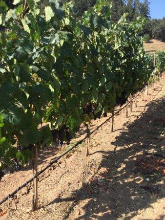 Pine Ridge Winery: photo0.jpg