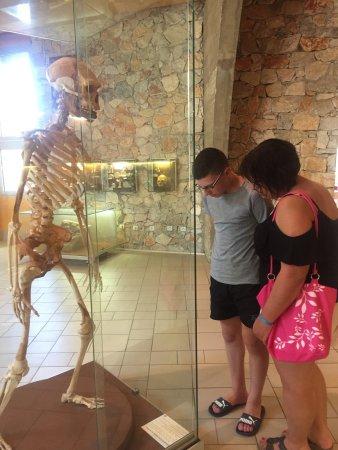 Museum of Prehistory Tautavel: photo0.jpg