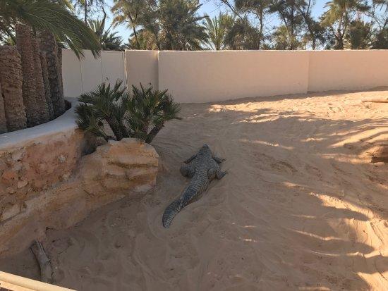 Midoun, Tunesië: photo3.jpg