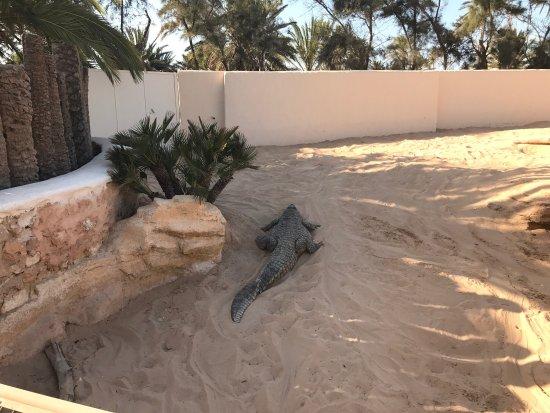 Midoun, Túnez: photo9.jpg