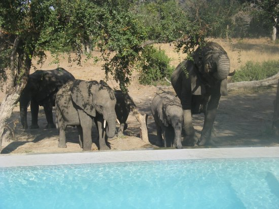 Ngala Private Game Reserve, South Africa: Waterhole (and pool) behind Lodge