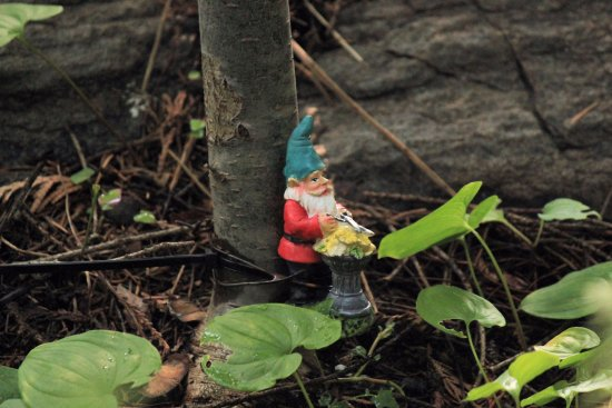 Ohme Gardens : Find the gnomes and fairies!