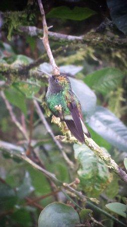Reserva Curi-Cancha: Curi Cancha Reserve