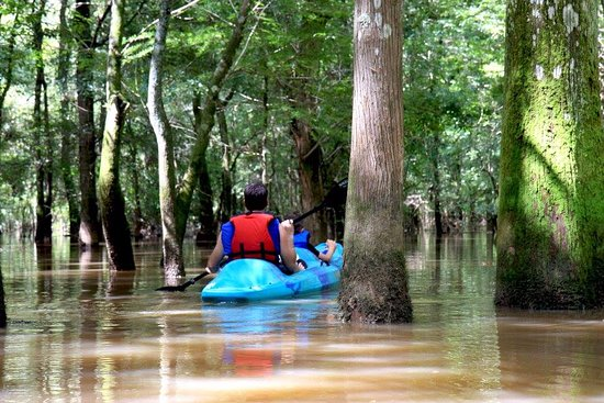 Pearl River, LA: kayaking through the swamp