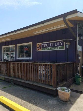 Fairview, Carolina del Norte: Trout Lily outside