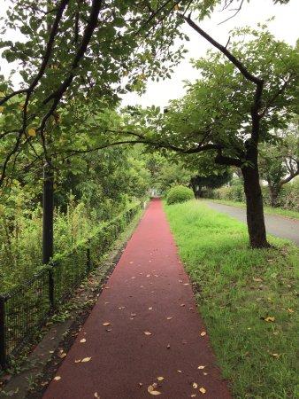 Kuki Shobu Park: ウォーキングコース