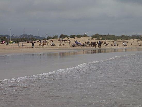 Essaouira Beach: Wide calm beach, with horse/camel rides at one end