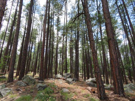 Прескотт, Аризона: Thick trees offer shade as you hike